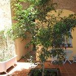 1er patio