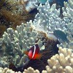 Debajo de las cabañas....peces payaso y corales