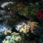 Aquarelle - Florist rue de Buci
