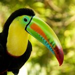 The resident toucan loves to pose for photos.