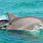 Dolphin Watch Boat Tours