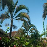 gorgeous palms, tropical plants & flowers surround the hotel