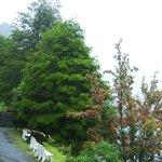 Arboles y vegetación de la zona