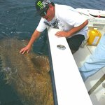 Bent Charters Goliath Grouper (Jewfish)