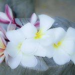 fiori frangipane