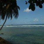 Vue d' un des côtés de Coral Reef