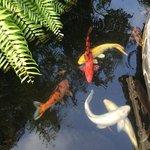 разноцветные рыбки возле ресепшн