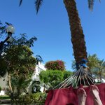 Relaxing in one of the hammocks near the pool
