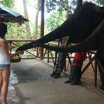 Me feeding the baby elephants