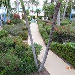 Sibonne gardens