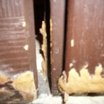 Mould on Bathroom Door