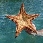 Star Fish in Princess Bay