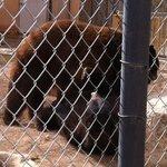 the playful bears