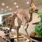 "Dinosaur fossils are among the many attractions at the ""Stones & Bones Museum"""