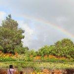 虹がきれいにでてました