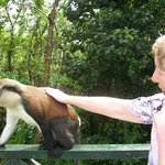 Meeting the Monkeys at the rain forest