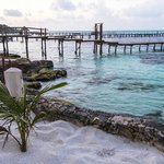 Hotel's Beach and the Amazing Reef Full of Every Tropical Fish You Can Think Of