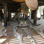 Elephant bones!