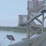 Little Heron in front of the tower