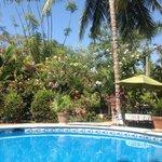 Poolside Vista