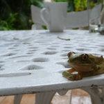 morning visitor