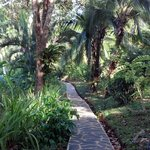Walkway to main building.  Lots of scarlet macaw sitings along here.