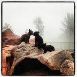 Bear kisses!