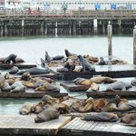 Sea lion cafe...