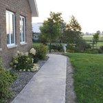 The back walkway- splendid with hydrangeas