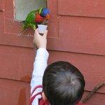 Child feeding bird