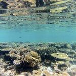 Fun with the GoPro - House Reef - Park Hyatt Hadahaa