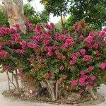 fiori dei giardini