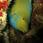 Colorful life and amazing creatures in all divesites