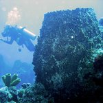 Dive in banco Chinchorro, and discover huge sponges