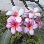 beautiful flowers around the hotel grounds