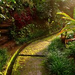 Pathway in the middle of the coffee plantation