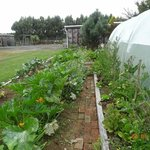 Organic vegetable garden and greenhouse