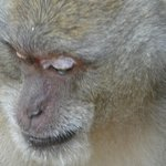 Monkey at road side enroute to Bamboo Bay