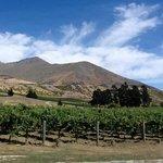 Peregrine vineyard