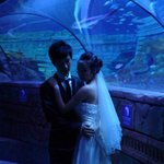 Sposi a SEA LIFE