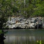 Dagny Johnson Key Largo Hammock Botanical State Park Foto