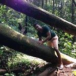 Chamal climbing thru trees