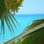 Aloe villa views