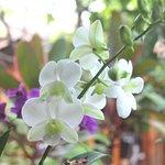Lovely flowers everywhere