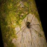 long-leg spider