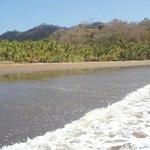menschenleerer Strand mit vielen Palmen