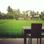 A room with paddy field view