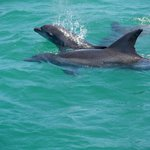 Dolphin Mum with baby
