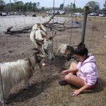 Visiting the farm animals
