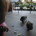 Feeding ducks on our patio